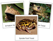 Frog and Toad Picture Cards - Printable Montessori materials by Montessori Print Shop.