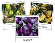 Fruit Vegetable Picture Cards Set 1 - Printable Montessori materials by Montessori Print Shop.