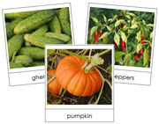 Fruit Vegetable Picture Cards Set 2 - Printable Montessori materials by Montessori Print Shop.