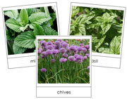 Herb Picture Cards - Printable Montessori Cards by Montessori Print Shop.