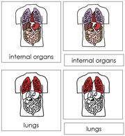 Internal Organs Nomenclature Cards (Red) - Printable Montessori materials by Montessori Print Shop.