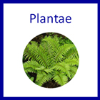 Plante Kingdom - Printable Montessori materials by Montessori Print Shop
