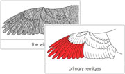 Wing Nomenclature Cards (Red) - Printable Montessori materials by Montessori Print Shop